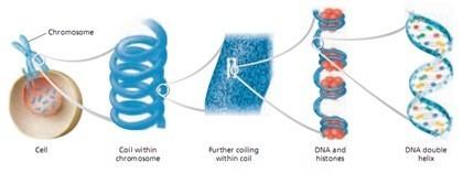Reproduksi Sel (bagian 1)