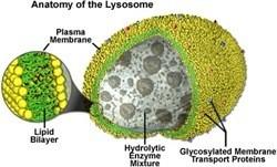 Organel-organel sel 6
