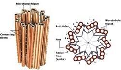 Organel-organel sel 10